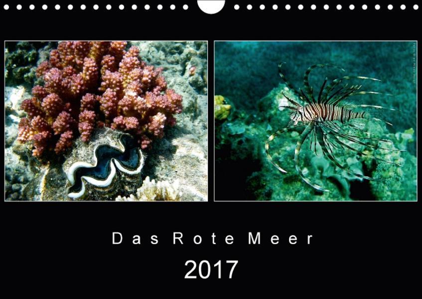 Das Rote Meer – 2017 (Wandkalender 2017 DIN A4 quer) - Coverbild