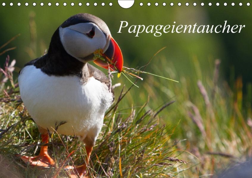 Papageientaucher (Wandkalender 2017 DIN A4 quer) - Coverbild