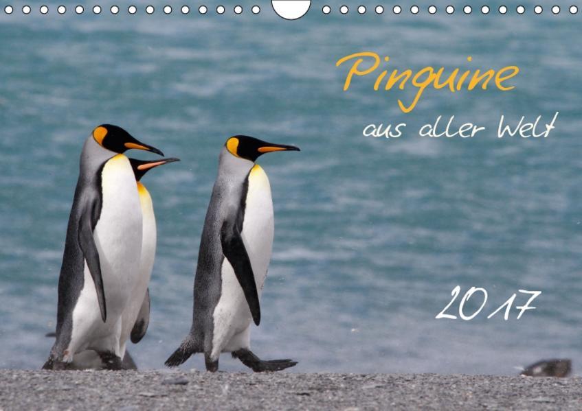 Pinguine aus aller Welt (Wandkalender 2017 DIN A4 quer) - Coverbild