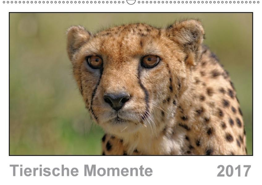 Tierische Momente (Wandkalender 2017 DIN A2 quer) - Coverbild