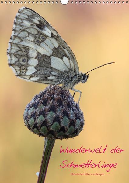 Wunderwelt der Schmetterlinge (Wandkalender 2017 DIN A3 hoch) - Coverbild