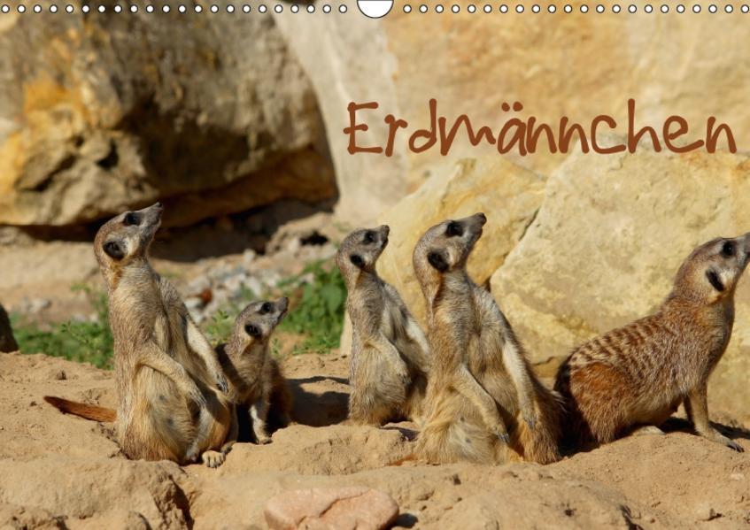 Erdmännchen (Wandkalender 2017 DIN A3 quer) - Coverbild