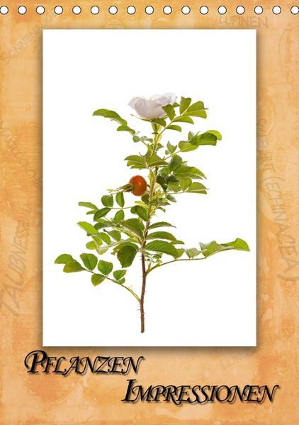 Pflanzen Impressionen (Tischkalender 2017 DIN A5 hoch) - Coverbild