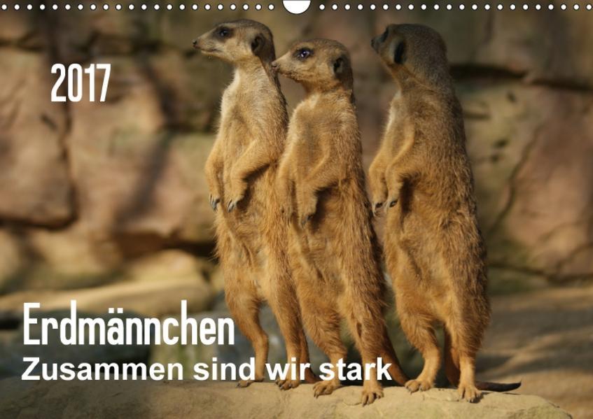 Erdmännchen – Zusammen sind wir stark / CH-Version (Wandkalender 2017 DIN A3 quer) - Coverbild