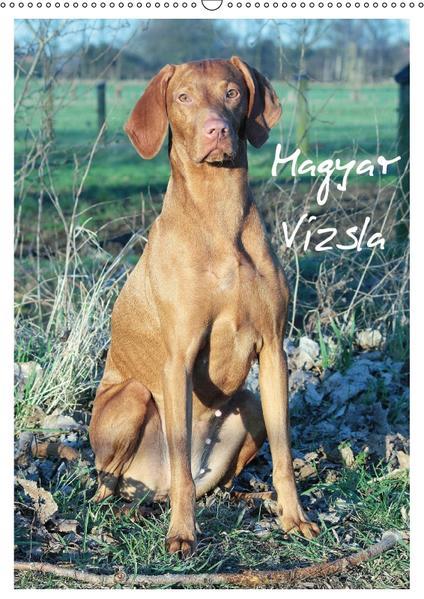 Magyar Vizsla (Wandkalender 2017 DIN A2 hoch) - Coverbild