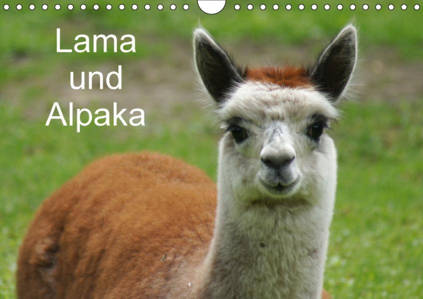 Lama und Alpaka (Wandkalender 2017 DIN A4 quer) - Coverbild