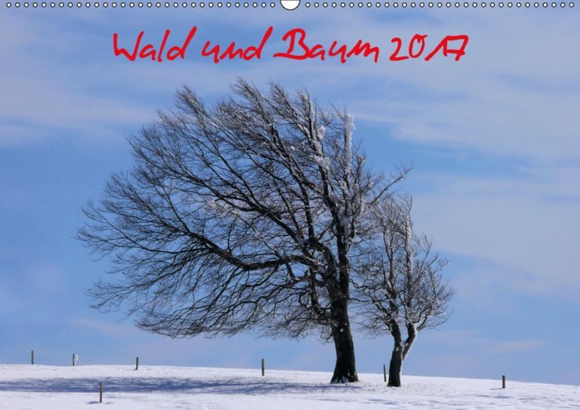 Wald und Baum 2017 (Wandkalender 2017 DIN A2 quer) - Coverbild