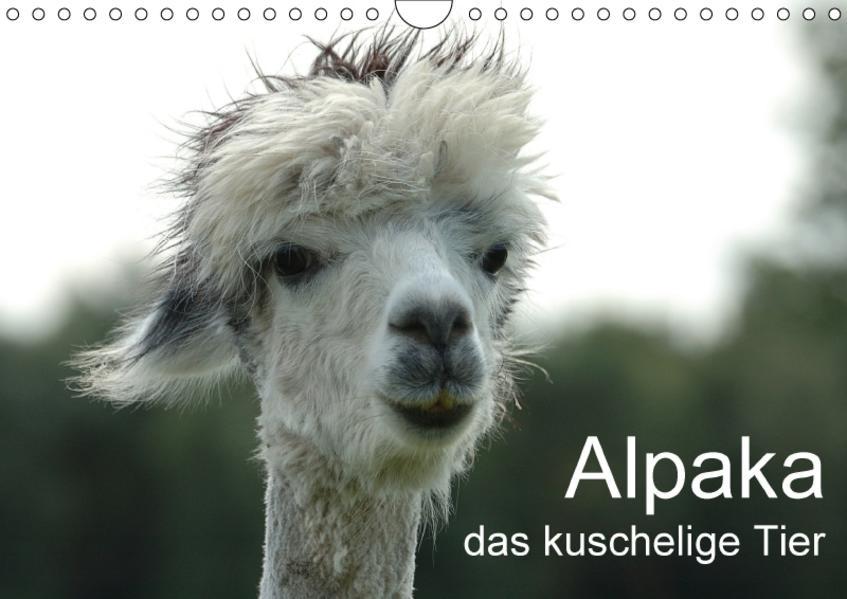 Alpaka, das kuschelige Tier (Wandkalender 2017 DIN A4 quer) - Coverbild