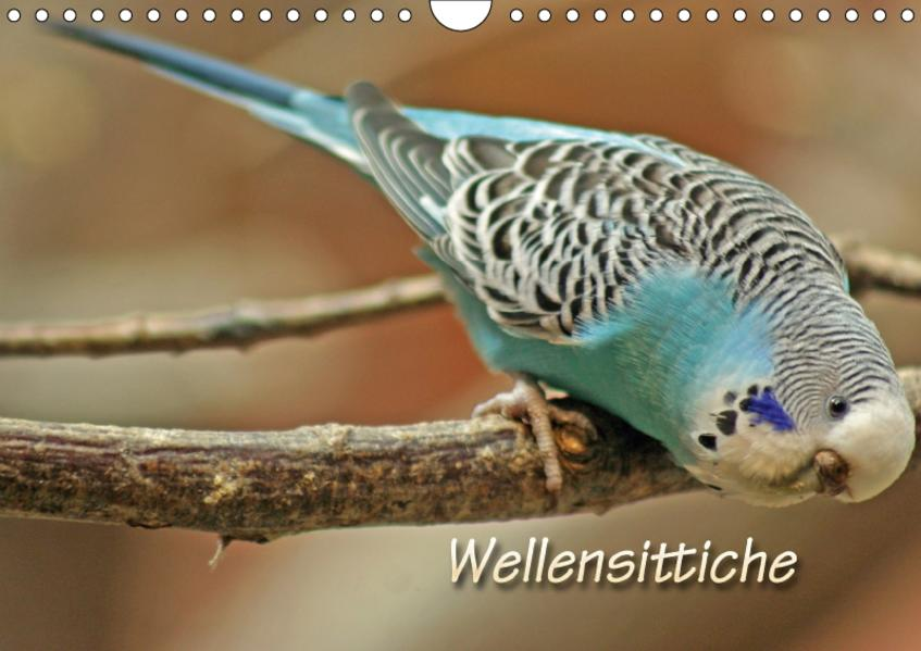 Wellensittiche (Wandkalender 2017 DIN A4 quer) - Coverbild