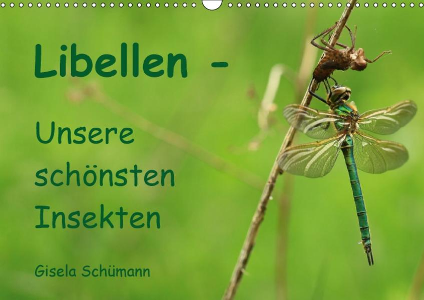 Libellen - Unsere schönsten Insekten (Wandkalender 2017 DIN A3 quer) - Coverbild