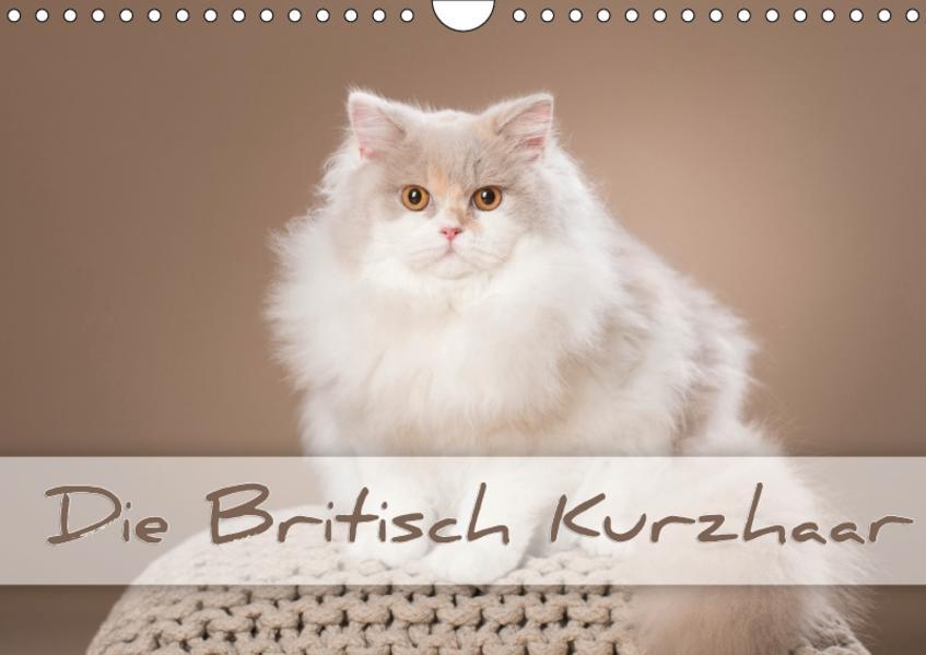 Die Britisch Kurzhaar (Wandkalender 2017 DIN A4 quer) - Coverbild