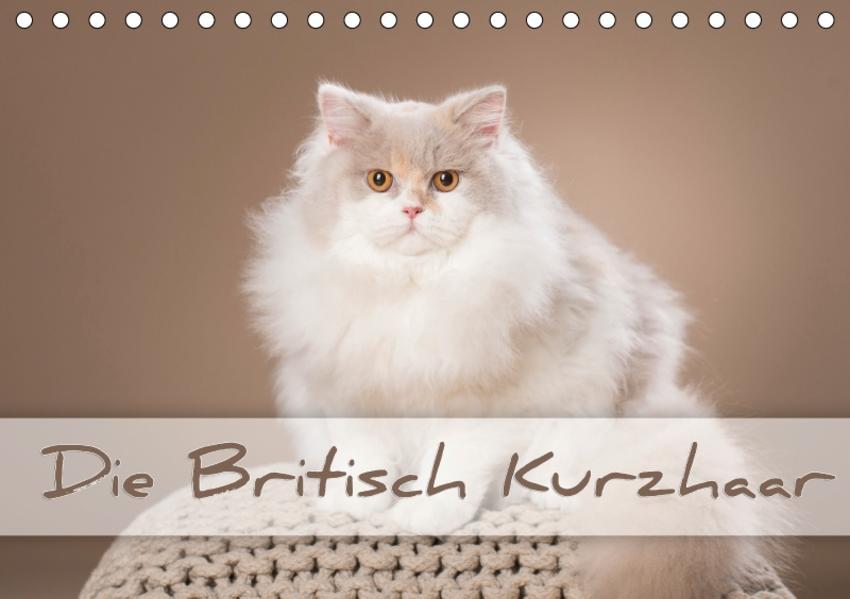 Die Britisch Kurzhaar (Tischkalender 2017 DIN A5 quer) - Coverbild