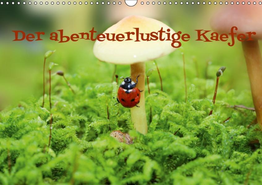 Der abenteuerlustige Käfer (Wandkalender 2017 DIN A3 quer) - Coverbild
