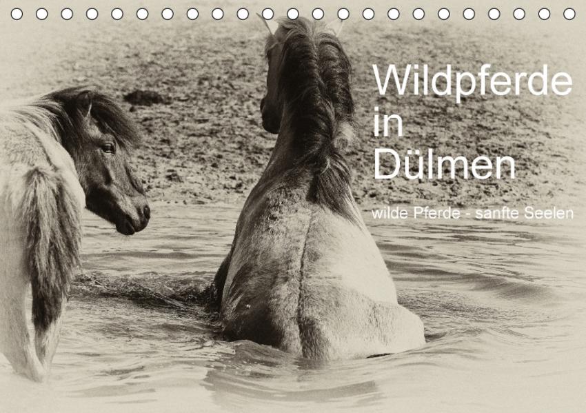 Wildpferde in Dülmen/ wilde Pferde - sanfte Seelen (Tischkalender 2017 DIN A5 quer) - Coverbild