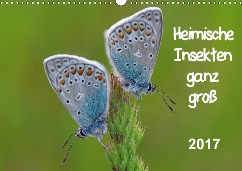 Heimische Insekten ganz GROSS (Wandkalender 2017 DIN A3 quer) - Coverbild