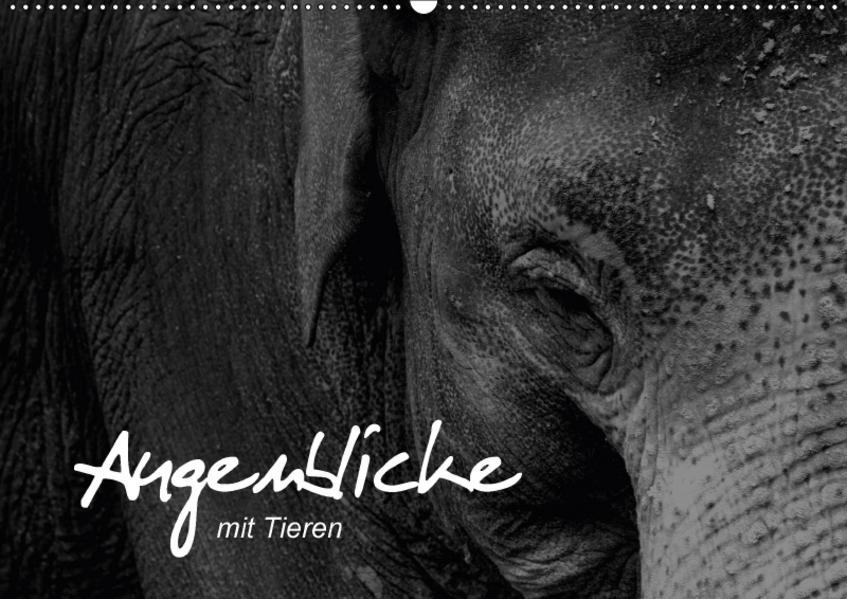 Augenblicke mit Tieren (Wandkalender 2017 DIN A2 quer) - Coverbild