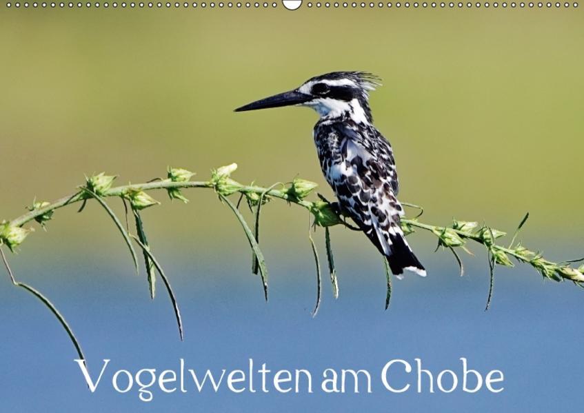Vogelwelten am Chobe (Wandkalender 2017 DIN A2 quer) - Coverbild
