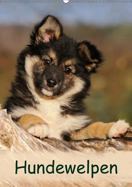 Hundewelpen (Wandkalender 2017 DIN A2 hoch) - Coverbild