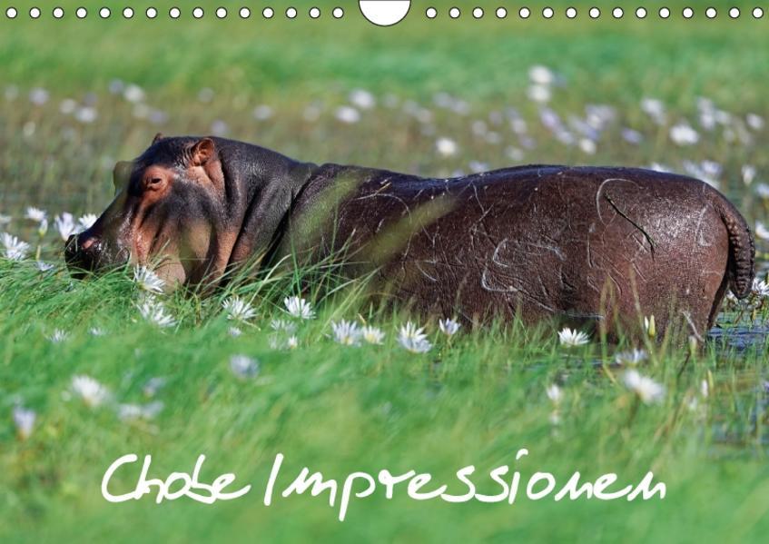 Chobe Impressionen (Wandkalender 2017 DIN A4 quer) - Coverbild