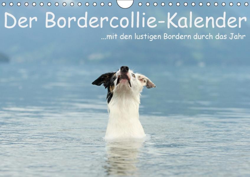 Der Bordercollie-Kalender (Wandkalender 2017 DIN A4 quer) - Coverbild