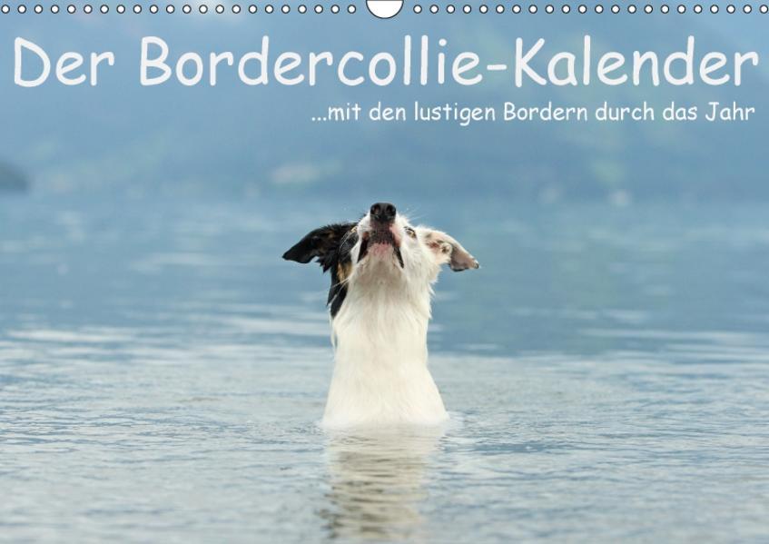 Der Bordercollie-Kalender (Wandkalender 2017 DIN A3 quer) - Coverbild