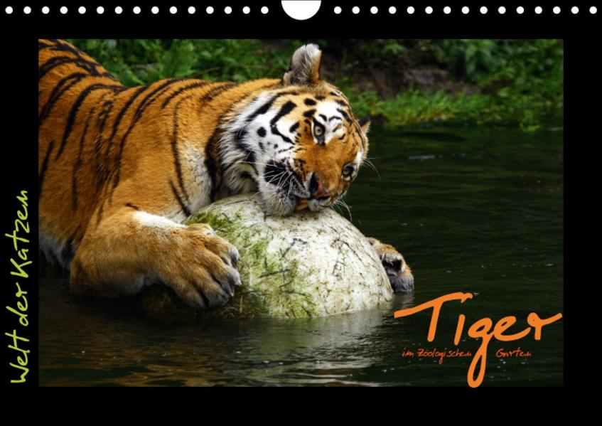 Welt der Katzen - Tiger (Wandkalender 2017 DIN A4 quer) - Coverbild