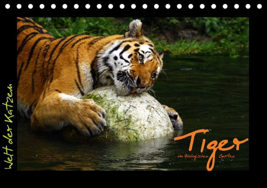 Welt der Katzen - Tiger (Tischkalender 2017 DIN A5 quer) - Coverbild