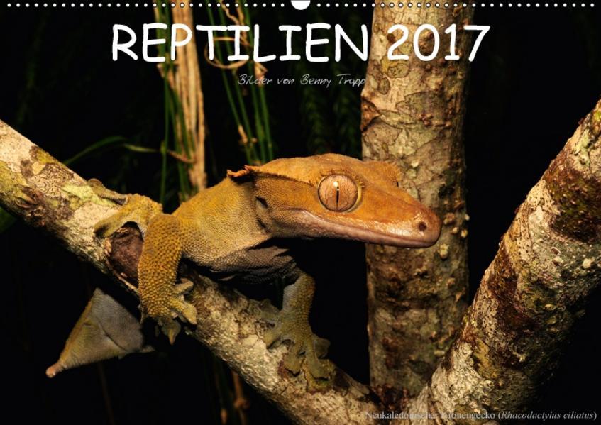 REPTILIEN (Wandkalender 2017 DIN A2 quer) - Coverbild