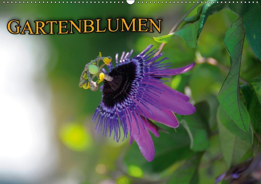 Gartenblumen (Wandkalender 2017 DIN A2 quer) - Coverbild