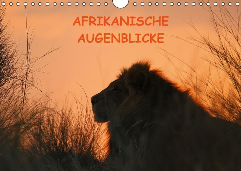 Afrikanische AugenblickeCH-Version  (Wandkalender 2017 DIN A4 quer) - Coverbild