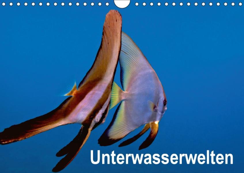 Unterwasserwelten (Wandkalender 2017 DIN A4 quer) - Coverbild