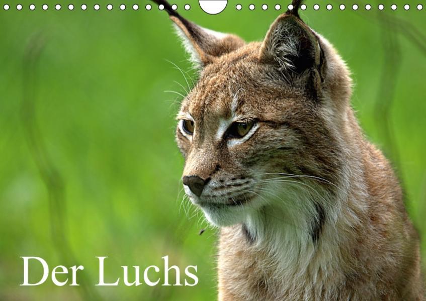 Der Luchs / Geburtstagskalender (Wandkalender 2017 DIN A4 quer) - Coverbild