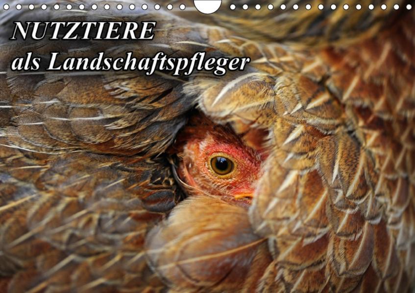 Nutztiere als Landschaftspfleger (Wandkalender 2017 DIN A4 quer) - Coverbild