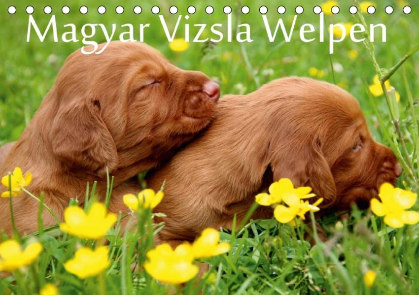 Magyar Vizsla Welpen (Tischkalender 2017 DIN A5 quer) - Coverbild