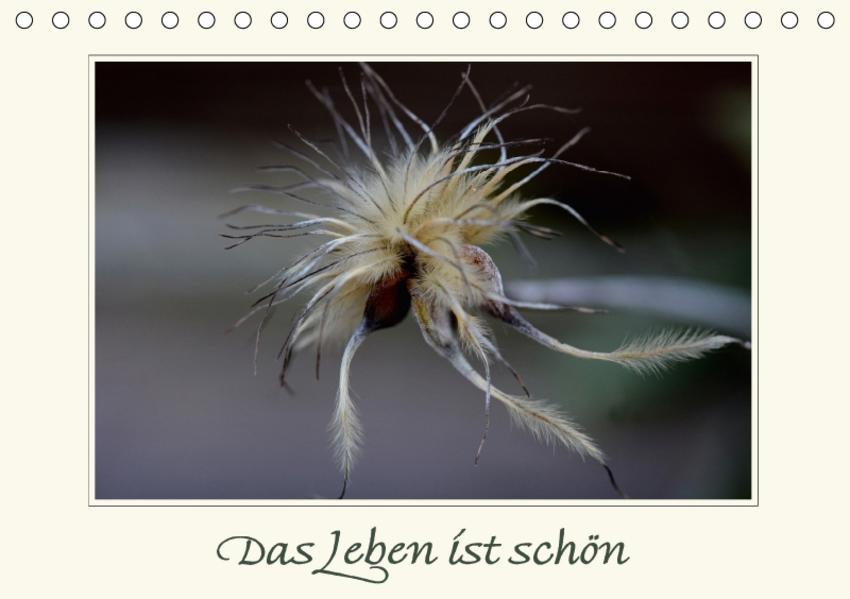 Das Leben ist schön (Tischkalender 2017 DIN A5 quer) - Coverbild
