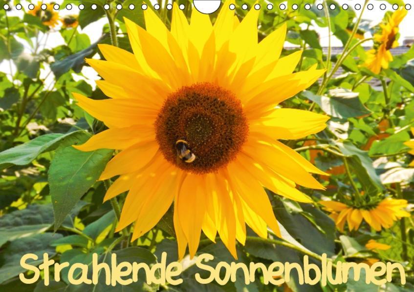 Strahlende Sonnenblumen / CH - Version (Wandkalender 2017 DIN A4 quer) - Coverbild