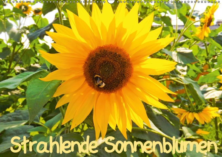 Strahlende Sonnenblumen / CH - Version (Wandkalender 2017 DIN A2 quer) - Coverbild