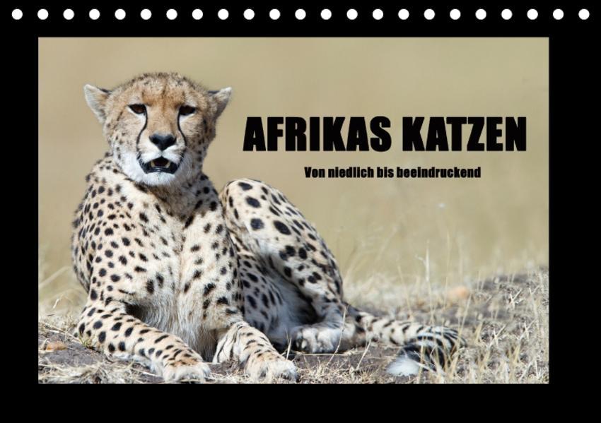 Afrikas Katzen (Tischkalender 2017 DIN A5 quer) - Coverbild