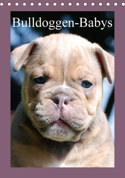 Bulldoggen-Babys (Tischkalender 2017 DIN A5 hoch) - Coverbild