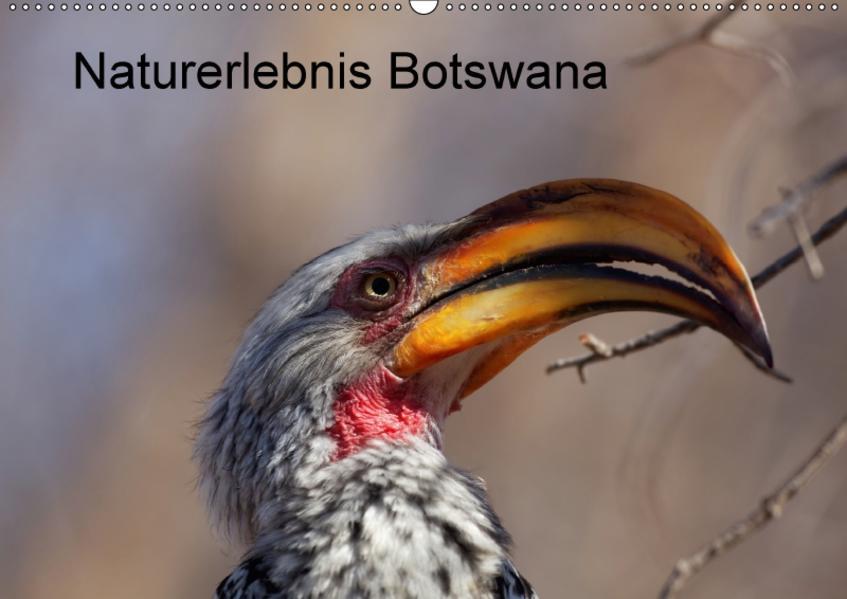 Naturerlebnis Botswana (Wandkalender 2017 DIN A2 quer) - Coverbild