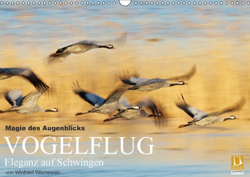 Magie des Augenblicks - Vogelflug - Eleganz auf Schwingen (Wandkalender 2017 DIN A3 quer) - Coverbild