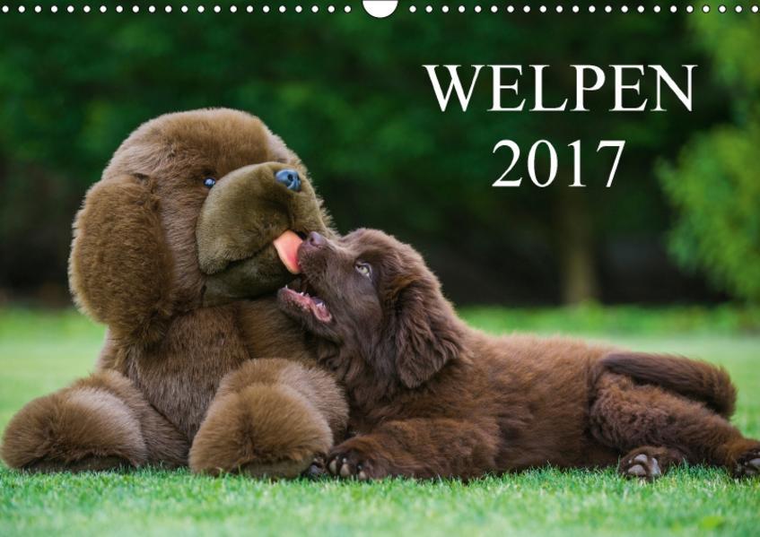 Welpen 2017 (Wandkalender 2017 DIN A3 quer) - Coverbild