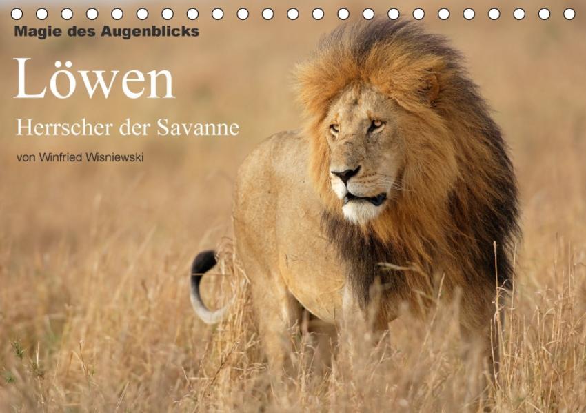 Magie des Augenblicks - Löwen - Herrscher der Savanne (Tischkalender 2017 DIN A5 quer) - Coverbild