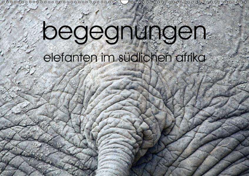 begegnungen - elefanten im südlichen afrika (Wandkalender 2017 DIN A2 quer) - Coverbild