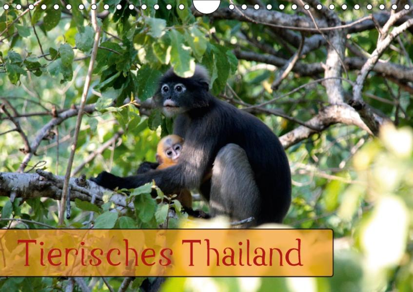 Tierisches Thailand (Wandkalender 2017 DIN A4 quer) - Coverbild