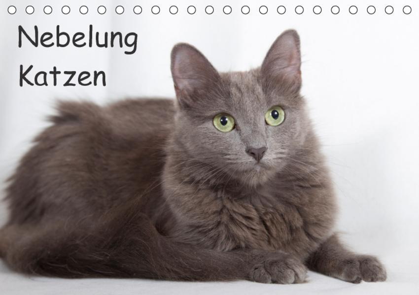 Nebelung Katzen (Tischkalender 2017 DIN A5 quer) - Coverbild