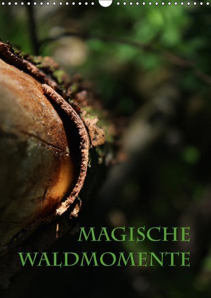 Magische Waldmomente (Wandkalender 2017 DIN A3 hoch) - Coverbild