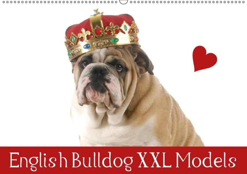 English Bulldog XXL Models (Wandkalender 2017 DIN A2 quer) - Coverbild