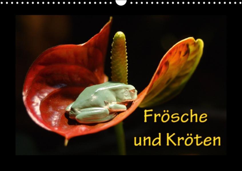 Frösche und Kröten (Wandkalender 2017 DIN A3 quer) - Coverbild