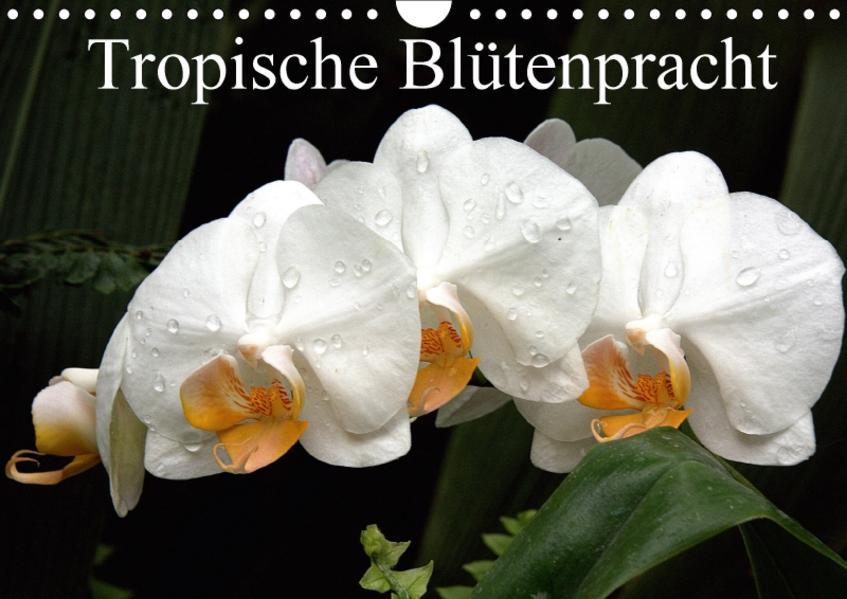 Tropische Blütenpracht (Wandkalender 2017 DIN A4 quer) - Coverbild
